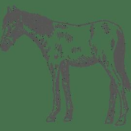 Berufsbild Pferdewirt/in
