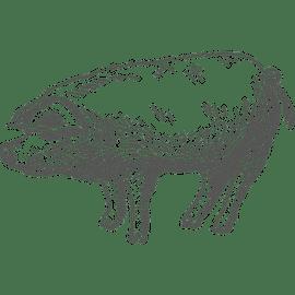 Berufsbild Tierwirt/in