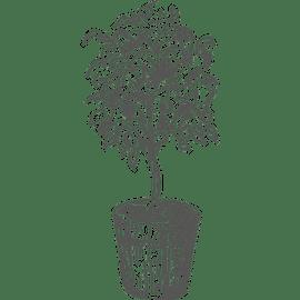 Betriebsleitung im Gartenbau (Assistenz) Gehalt