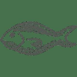 Berufsbild Fischwirt/in