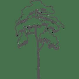 Holzmechaniker/in Gehalt