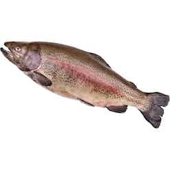 Ausbildung Fischwirt/in