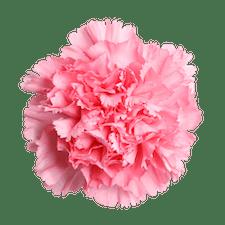 Ausbildung Betriebsleitung im Gartenbau (Assistenz)