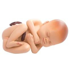 Ausbildung Hebamme/Entbindungspfleger