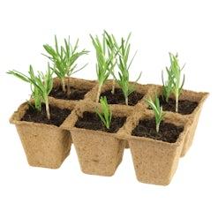 Ausbildung Pflanzentechnologe/technologin