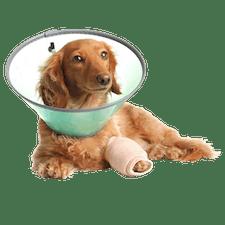 Ausbildung Tiermedizinische/r Fachangestellte/r