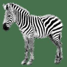 Ausbildung Tierpfleger/in