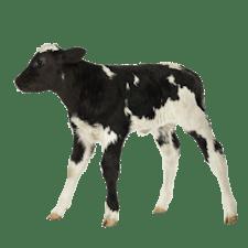 Ausbildung Tierwirt/in