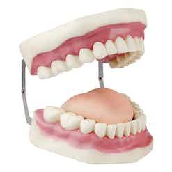Ausbildung Duales Studium Dentalhygiene und Präventionsmanagement