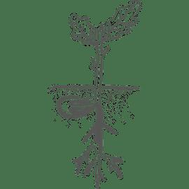 Pflanzentechnologe/technologin Gehalt