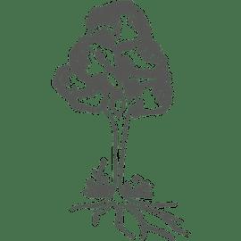 Berufsbild Forstwirt/in