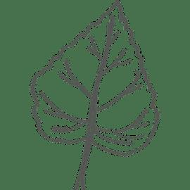 Berufsbild Pflanzentechnologe/technologin